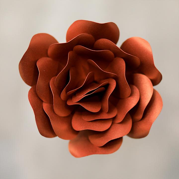 Pearlized-Copper ROSE