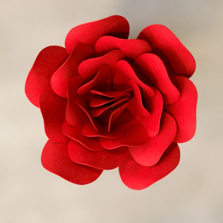 Pearlized-Dark-Red ROSE