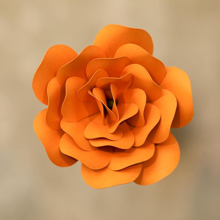 Pumpkin ROSE