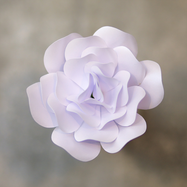 Rose-Pearlied-Bright-White