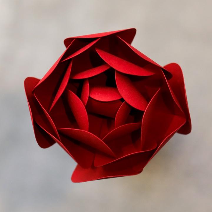 Pearlized Dark Red Peony
