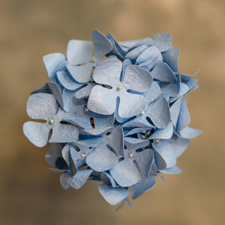 Washi Blue Hydrangea