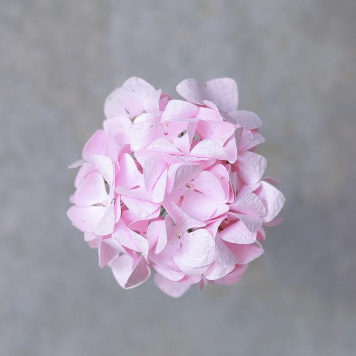 Washi Pastel Pink Hydrangea