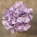 Washi Pastel Purple Hydrangea