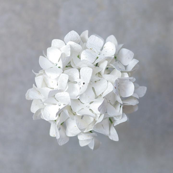 Washi White Hydrangea