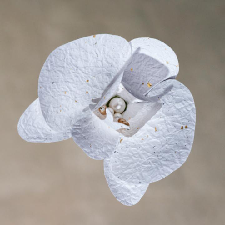 Washi White Orchid